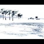 Gabriele Stolze - Jahreszeiten in der märkischen Landschaft