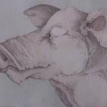 Schwein - Johannes Karl Gotthard Niedlich