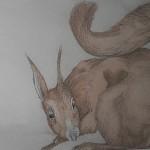 Eichhörnchen - Johannes Karl Gotthard Niedlich