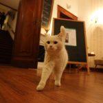 Die kunstinteressierte Katze © Dirk Schaal