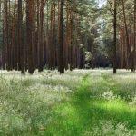 Eckart Schmidt Einfach Wald