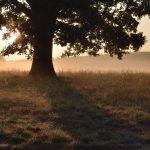 Eckart Schmidt Licht im Baum