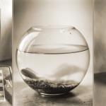 Jörg Hannemann — Dreiteiliges Projekt »Nah am Wasser oder ... von Fischen und anderer Sehnsucht«